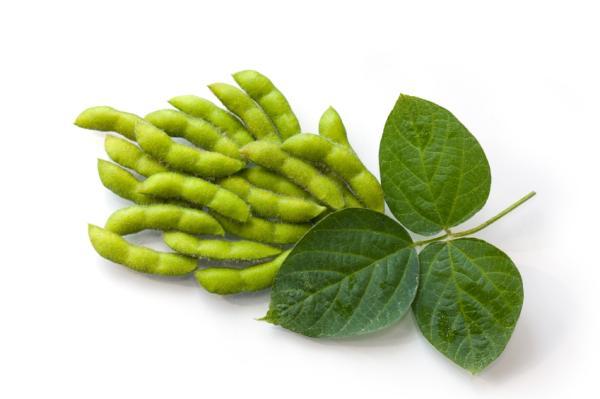 Alimentos que aumentan los estrógenos - Haba de soja