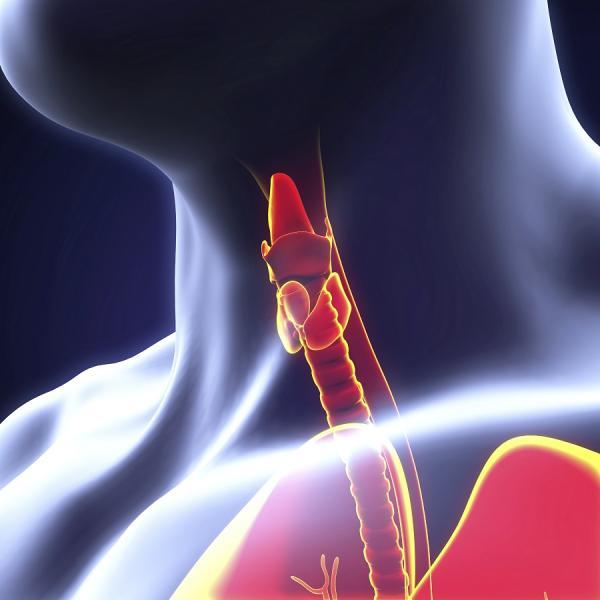 que pasa si la tirotropina esta baja