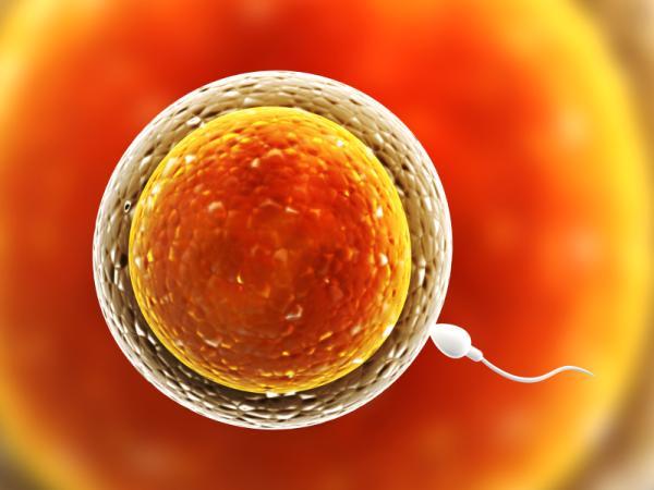 Cómo mejorar la calidad de mis óvulos - Cómo saber si los óvulos son de buena calidad