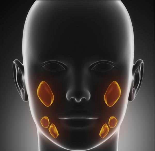 Cómo limpiar las glándulas salivales - ¿Qué son las glándulas salivales?