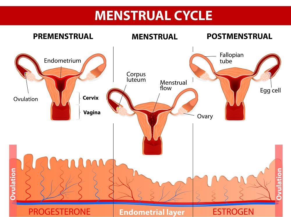 como bajar la prolactina alta en hombres