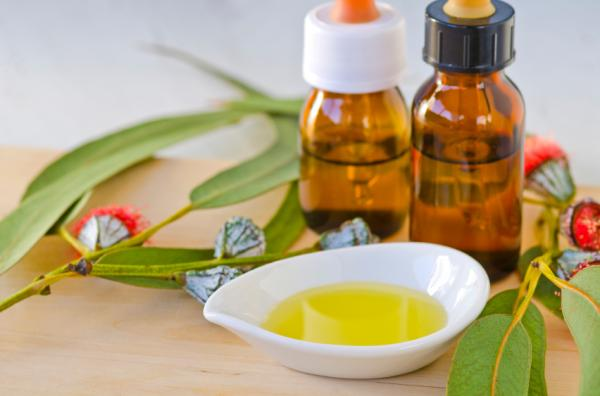 Eucalipto: propiedades medicinales y contraindicaciones - Propiedades medicinales del eucalipto