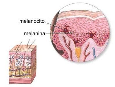Cómo producir melanina en el cuerpo - Qué es la melanina y para qué sirve