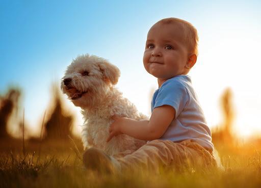 ¿Es bueno tener perros con bebés? - Bebés y perros: beneficios