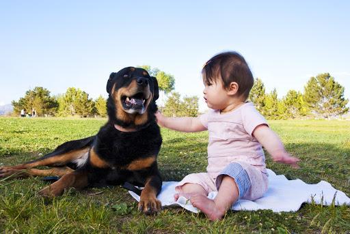 ¿Es bueno tener perros con bebés? - Perros y bebés: higiene