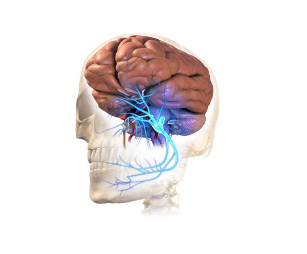 Por qué siento que se me duerme una parte de la cabeza - El nervio trigémino
