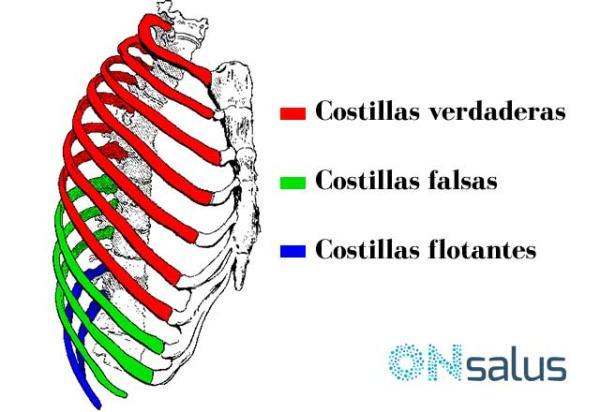 Dolor en las costillas flotantes: causas y tratamiento - Tipos de costillas humanas