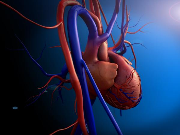 Bilirrubina baja: causas, síntomas y tratamiento - Causas de la bilirrubina baja