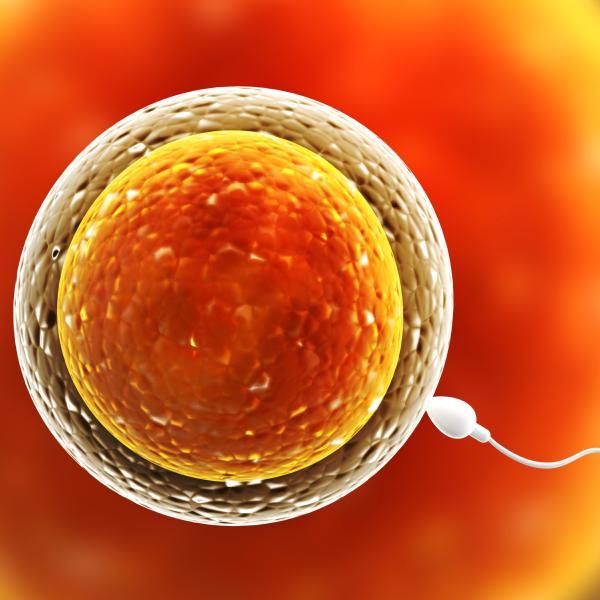 dos dias antes de ovular se puede quedar embarazada