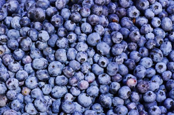 10 alimentos antiedad para mantenerse joven - Arándanos, ricos en antioxidantes