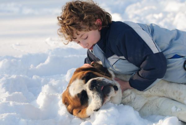 Qué hacer en caso de mordedura de perro - Evitar las mordeduras de perros en niños