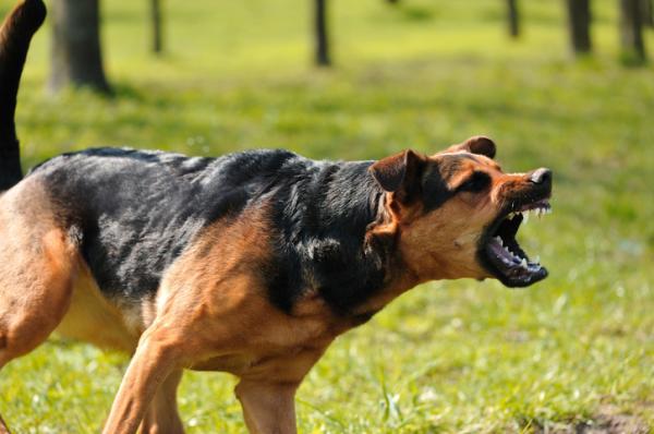 Qué hacer en caso de mordedura de perro