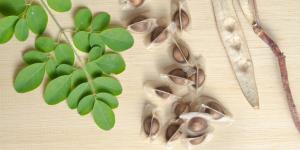 Semillas de moringa: para qué sirven y cómo tomarlas