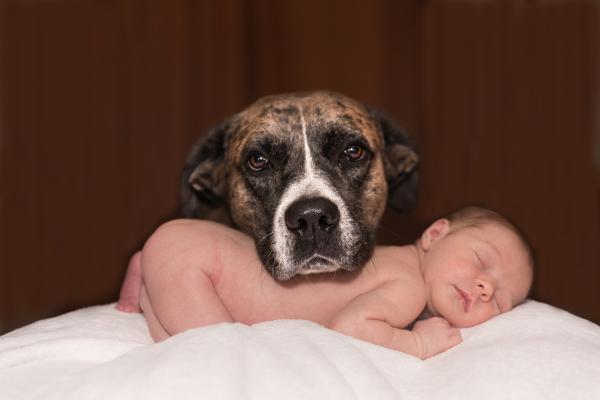 ¿Es malo tener perros estando embarazada? - Cómo presentar el bebé al perro correctamente