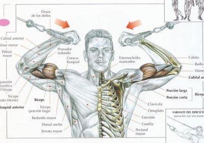 Ejercicios para bíceps - Bíceps con brazos en cruz y polea alta
