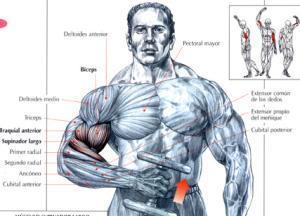 Ejercicios para bíceps - Curl de bíceps alterno tipo martillo