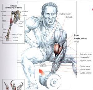 Ejercicios para bíceps - Curl de bíceps con apoyo