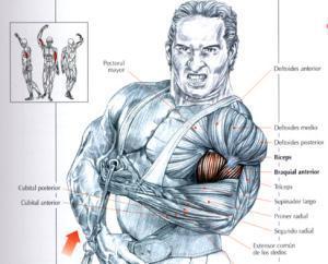 Ejercicios para bíceps - Curl de bíceps con polea