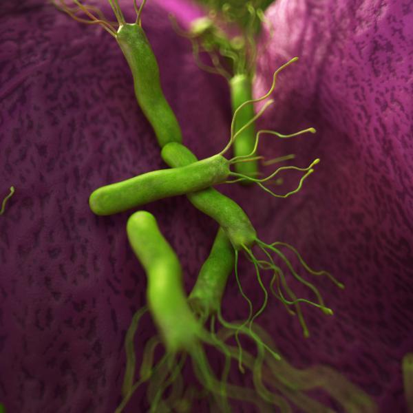 ¿La bacteria Helicobacter pylori se contagia?