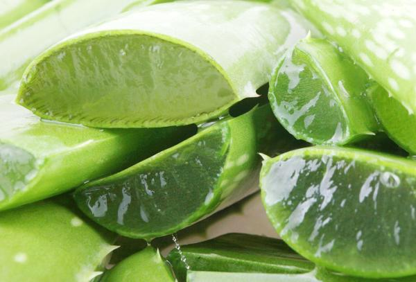 Cómo curar boqueras en niños - Sábila o Aloe vera, remedio natural para quitar la queilitis angular