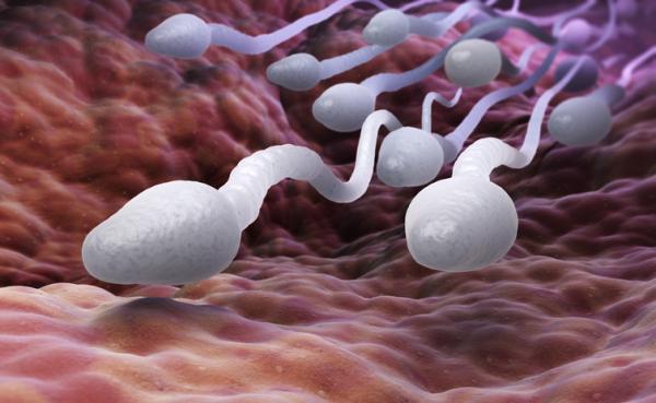Por qué el esperma huele a cloro - Composición del esperma