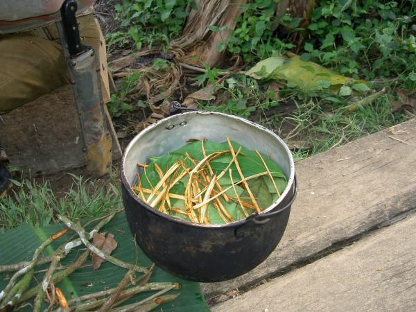 Ayahuasca: qué es, para qué sirve y efectos