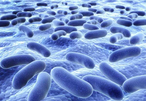 Prepucio irritado: causas y tratamiento - Prepucio inflamado por infección