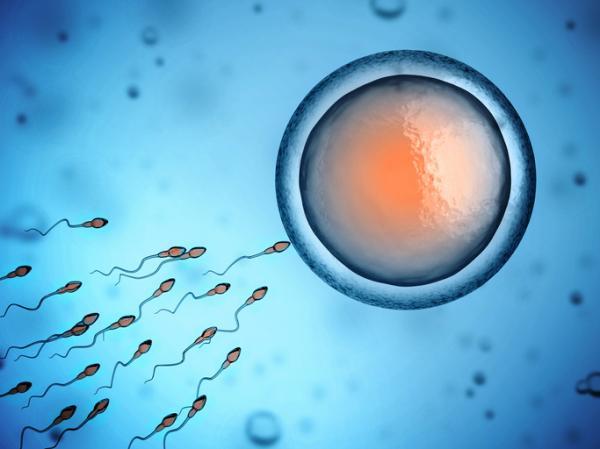 ¿Es normal que se salga el esperma después de la relación sexual? - ¿Si se sale el esperma puedo quedar embarazada?