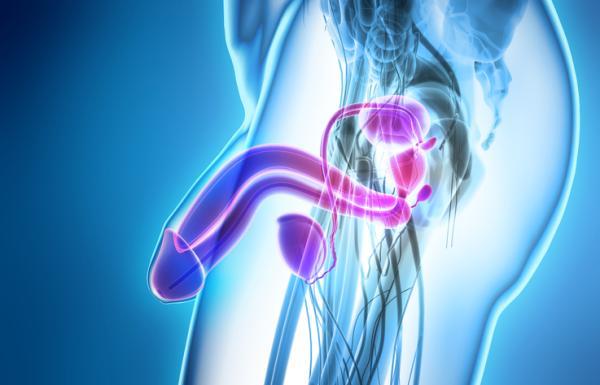 Epididimite: tratamento, sintomas e causas