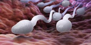 Quando sai o líquido pré-ejaculatório?