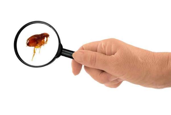 Coceira no corpo à noite: causas e soluções - Presença de insetos no quarto