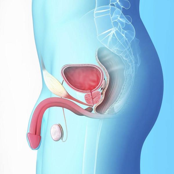 cura natural prostatitis bacteriana